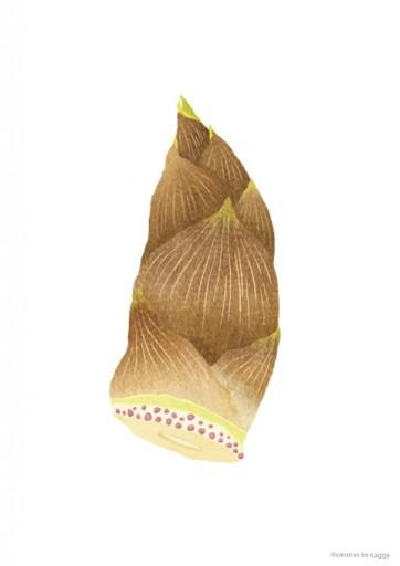 : 野菜のイラスト:門真蓮根(かどまれんこん)