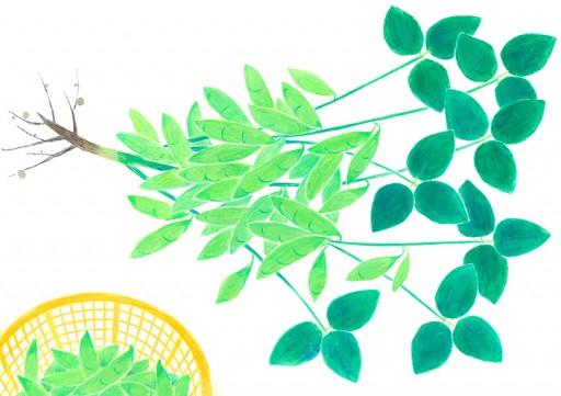 : 春野菜